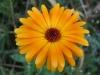 10-octobre-fleurs-2013-45-jpg