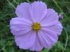 10-octobre-fleurs-2013-46-jpg