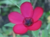10-octobre-fleurs-2013-47-jpg