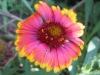 10-octobre-fleurs-2013-51-jpg