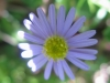 10-octobre-fleurs-2013-56-jpg