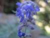 10-octobre-fleurs-2013-62-jpg
