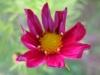 10-octobre-fleurs-2013-64-jpg