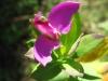 10-octobre-fleurs-2013-66-jpg