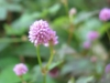 10-octobre-fleurs-2013-74-jpg