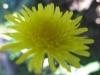 11-novembre-fleurs-2012-1-jpg