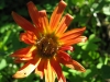 11-novembre-fleurs-2012-11-jpg