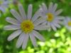 11-novembre-fleurs-2012-14-jpg