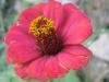 11-novembre-fleurs-2012-15-jpg
