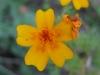 11-novembre-fleurs-2012-17-jpg