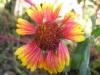 11-novembre-fleurs-2012-2-jpg