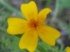 11-novembre-fleurs-2012-23-jpg