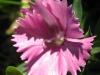 11-novembre-fleurs-2012-4-jpg