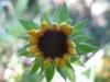 11-novembre-fleurs-2012-6-jpg