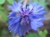 11-novembre-fleurs-2012-8-jpg