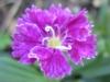 11-novembre-fleurs-2012-9-jpg