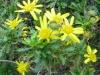 12-d%c3%a9cembre-fleurs-2012-3-jpg