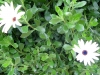 12-d%c3%a9cembre-fleurs-2012-6-jpg