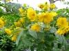 12-d%c3%a9cembre-fleurs-2012-7-jpg