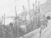 Palmes liées Ospedaletti fin 19°
