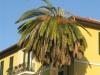 bordighera-centro-mercato-jpg