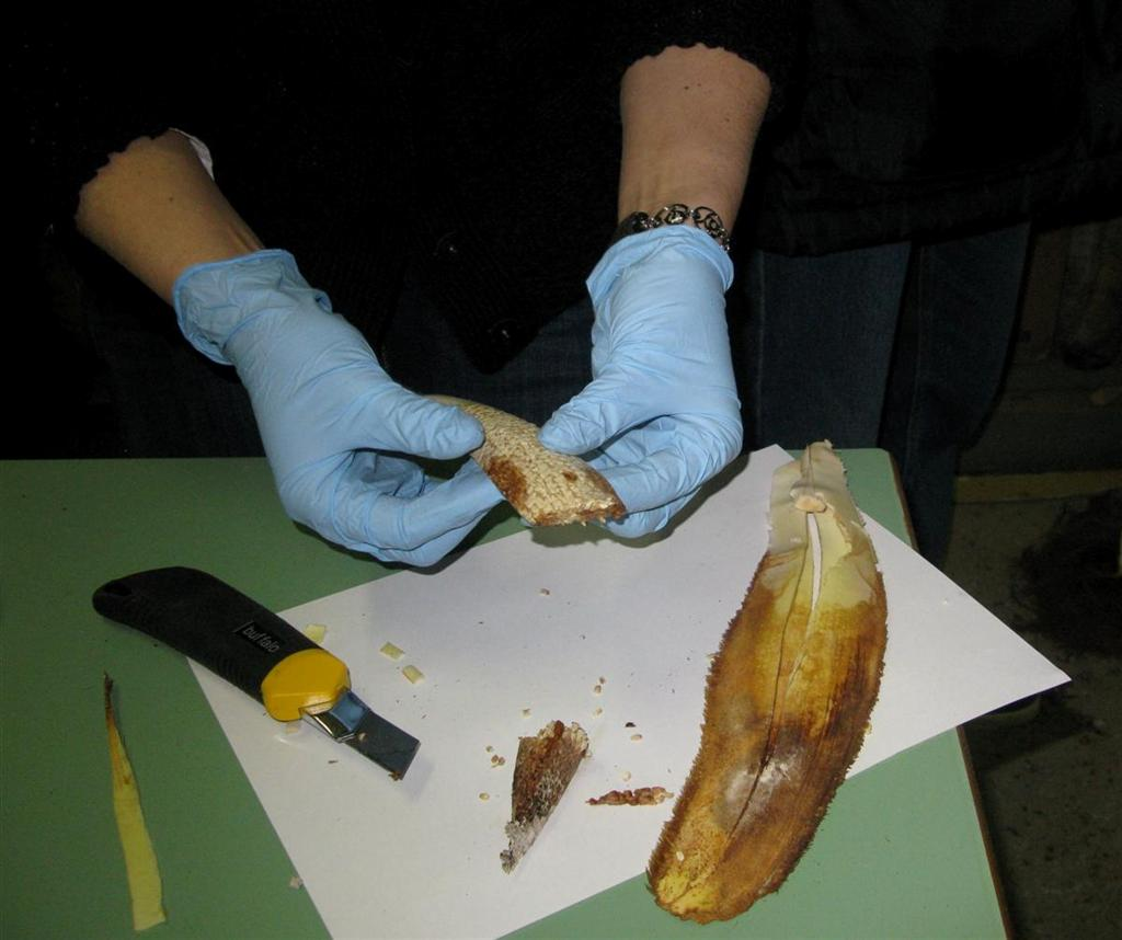 dissection-2011-12
