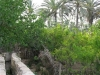 2irrigation-04-gabes-chenini