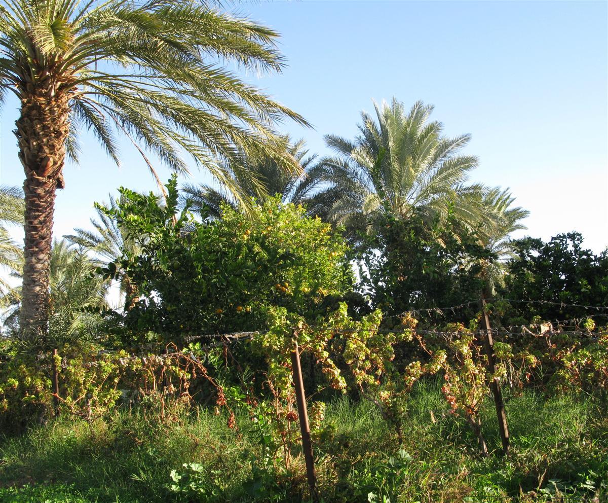 ghardaia-agriculture-6