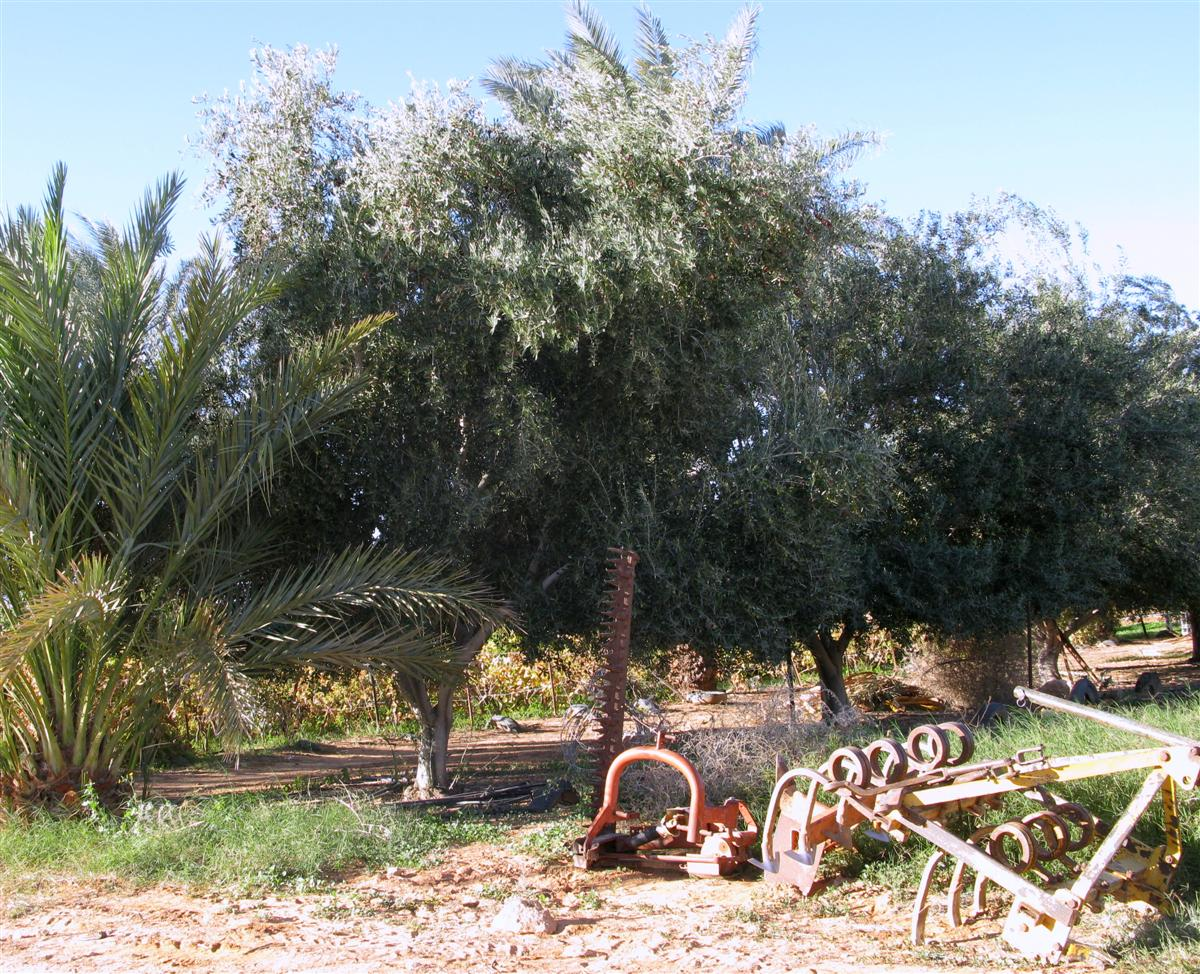 ghardaia-agriculture-7