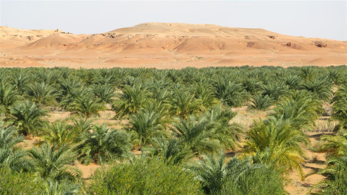 ghardaia-palmeraie-1