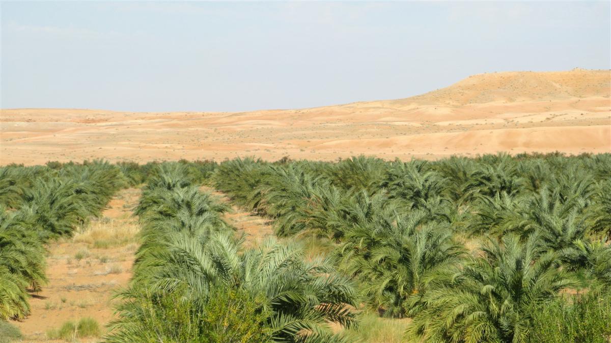 ghardaia-palmeraie-2