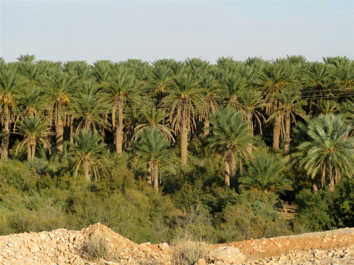 ghardaia-palmeraie-3