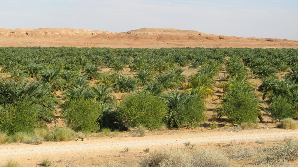 ghardaia-palmeraie