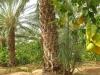 ghardaia-agriculture-1