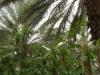 ghardaia-agriculture-3