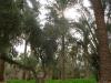 ghardaia-agriculture