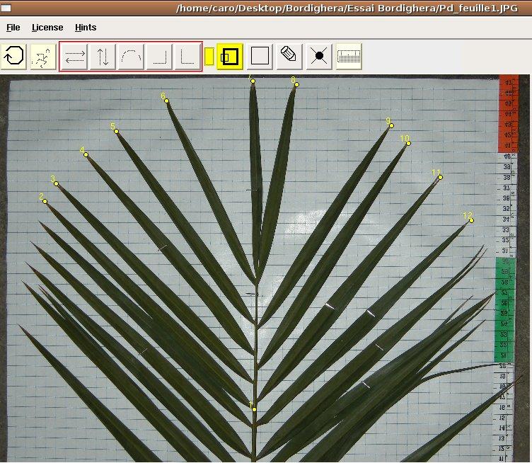 leaves-results-landmark