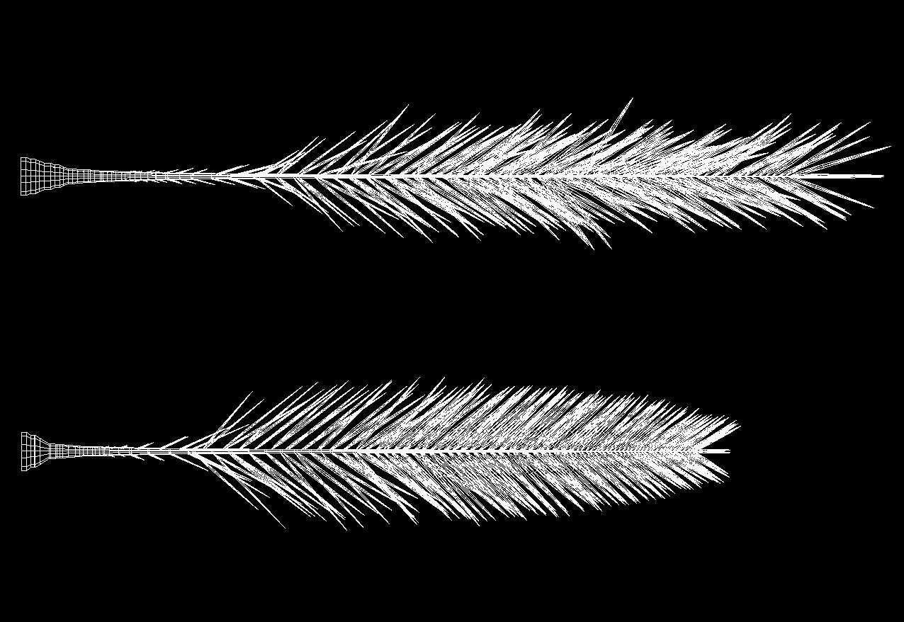 morphotype-ebrea-romana-1