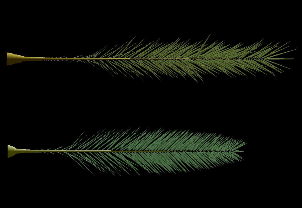 morphotype-ebrea-romana-3