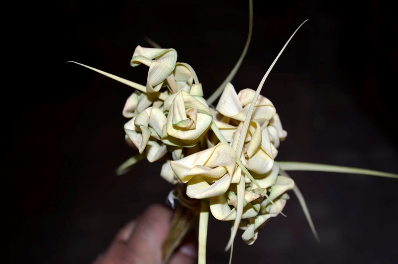 rameaux-egypte-palm-flower-1-elraheb