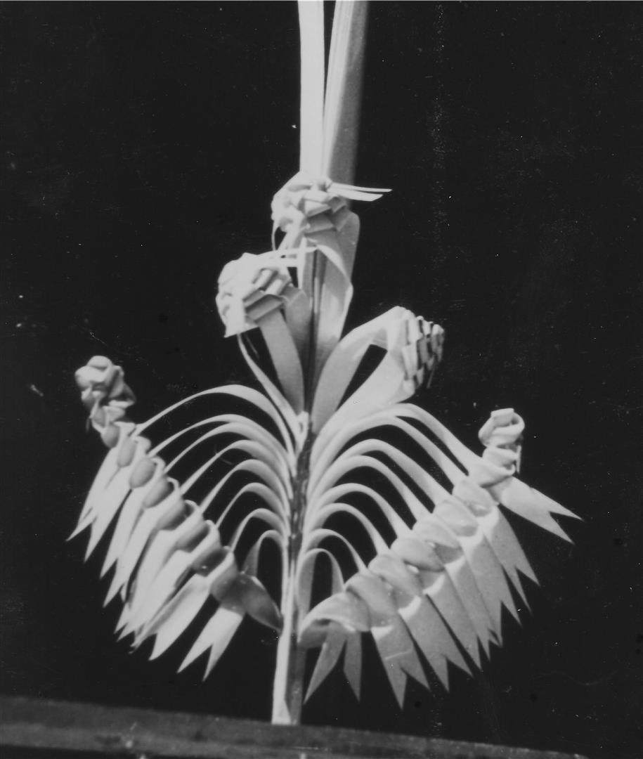 rameaux-provence-nice-1943-malavielle-15