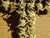 rameaux-provence-menton-ca1995-gargiuli-7