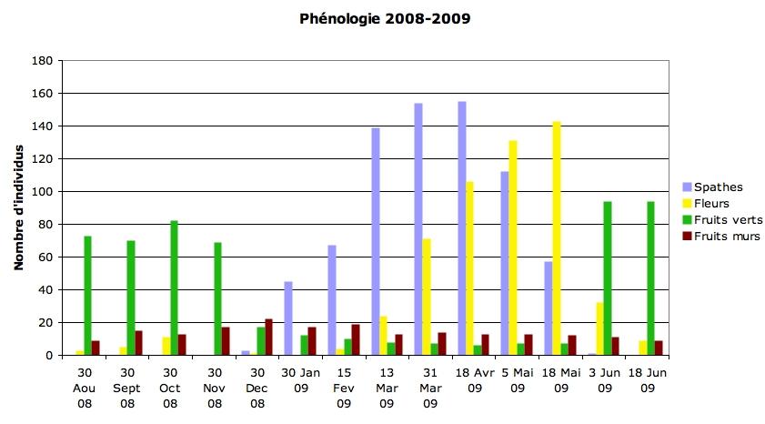 itphenologie_07-2009