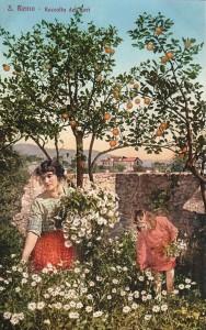 SanRemo oranges et fleurs